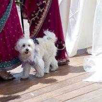 Multicultural Filipino Hindu Desi Wedding Apropos Creations 17