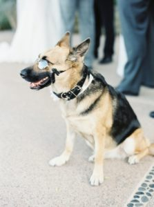 Pets in your Weddings